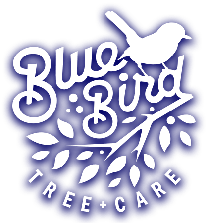 Bluebird Tree Care Logo