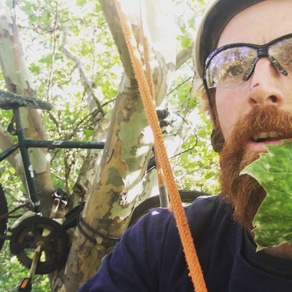 Ben Larson, a man with a red beard wearing a helmet and safety glasses, is in a tree. Rigging ropes are visible around him.