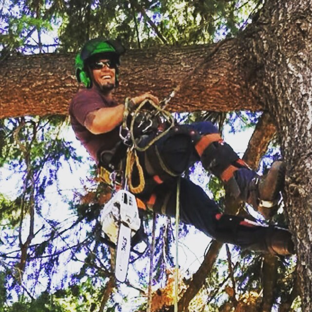 Jaime Quinonez, a man with a dark beard, is high in a large pine tree. He is wearing safety glasses, a helmet, climbing ropes, and a chainsaw clipped to his belt. He is smiling at the camera.